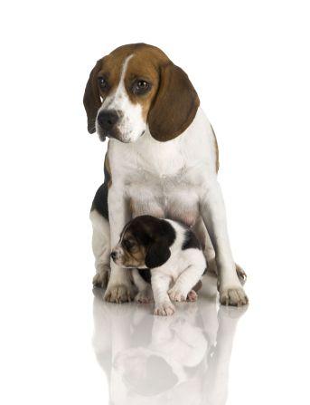 ¿Necesitamos más cachorros?