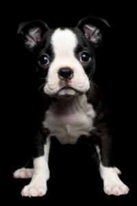 Cachorros encantadores