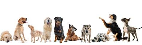 muchos_perros2