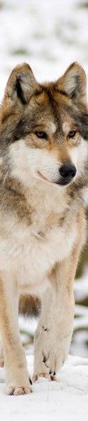 Como apareció en la portada de Animalia 24