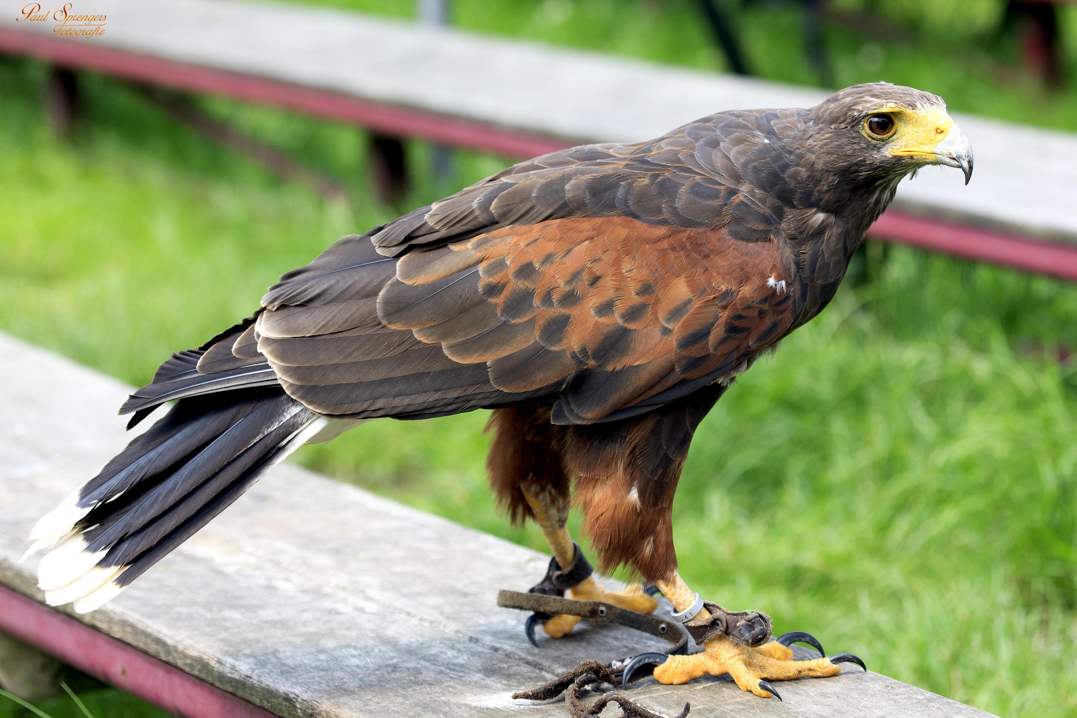 bird-of-prey-188817