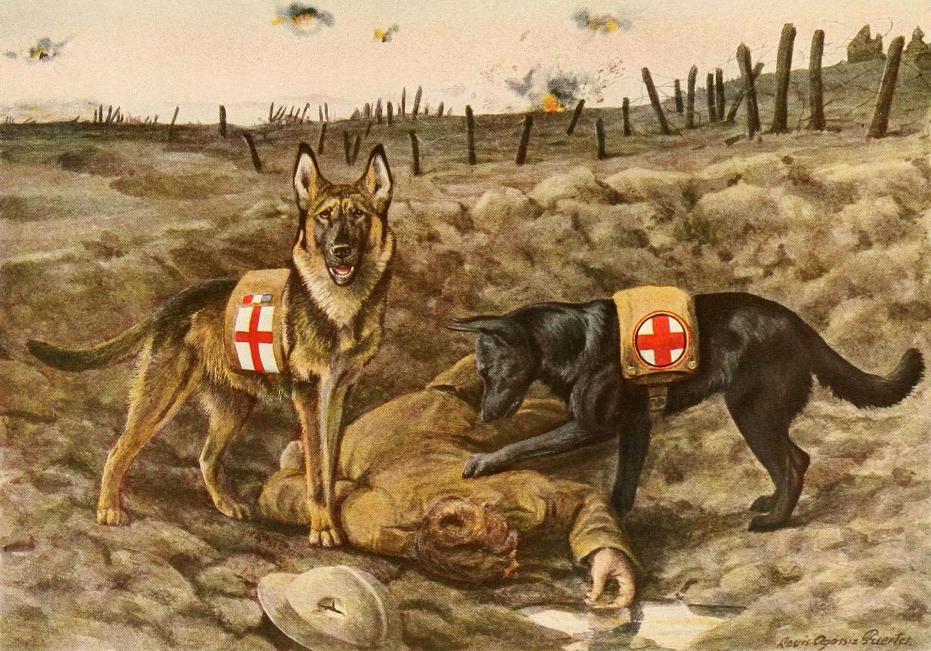 german-shepards-996405_1920