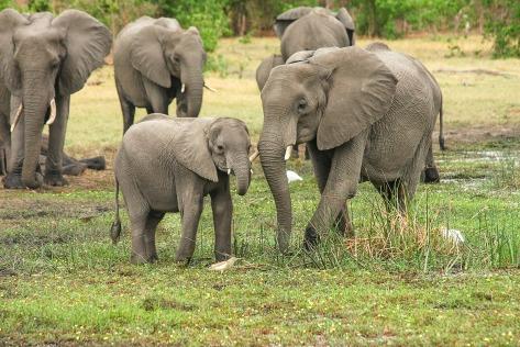 elephant-2923917_1920